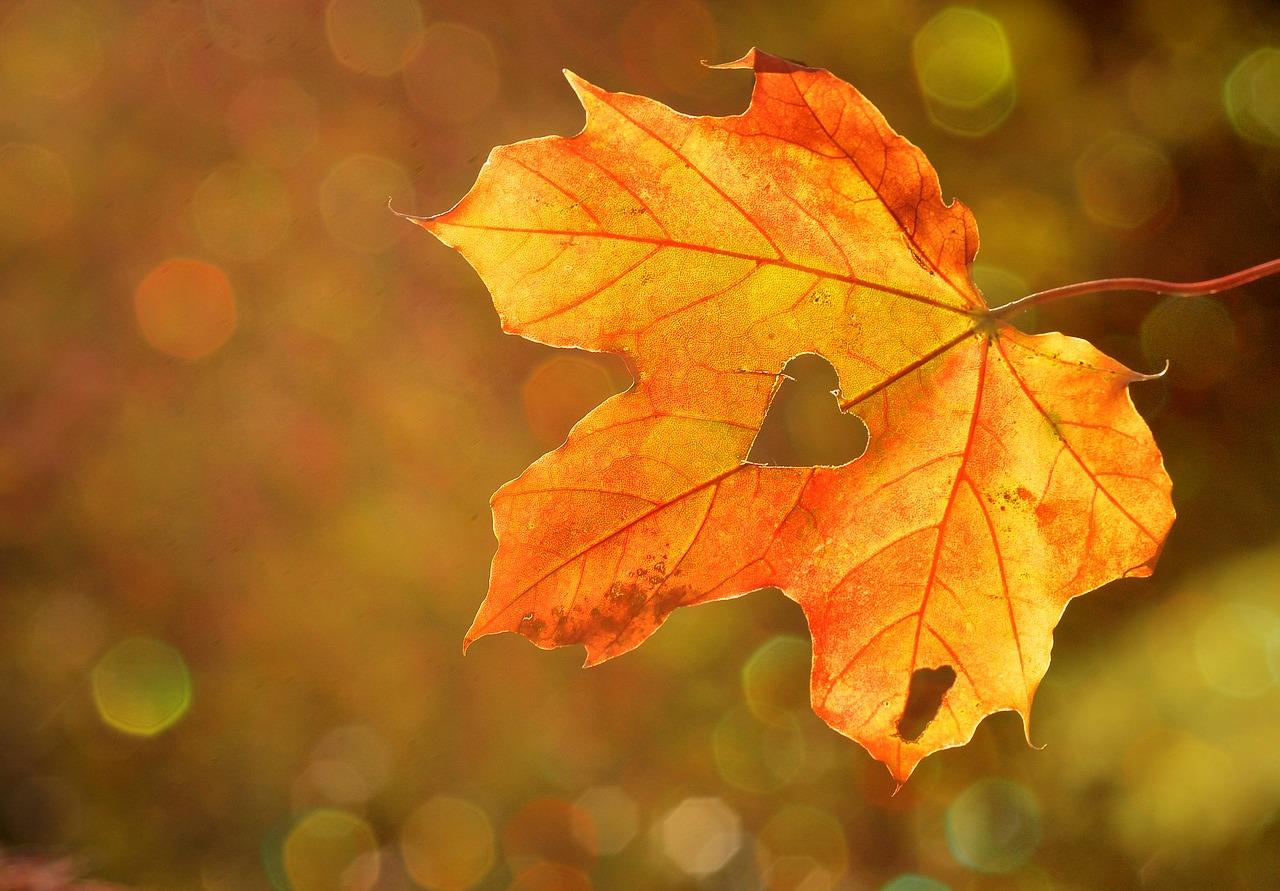 乾燥する季節に超音波アロマ加湿器で風邪対策