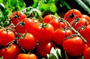 ミニトマト イメージ