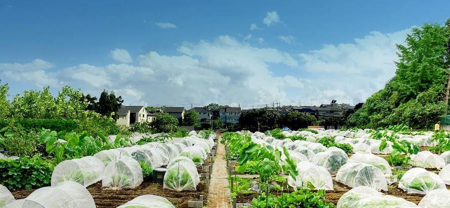 【貸し農園】東京都内のシェア畑はいくらから借りられる? 料金一覧を作ってみました