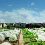 【東京の貸し農園】シェア畑なら都内に多数あり!自転車や電車で気軽に!サポート付きで有機・無農薬栽培ができる!